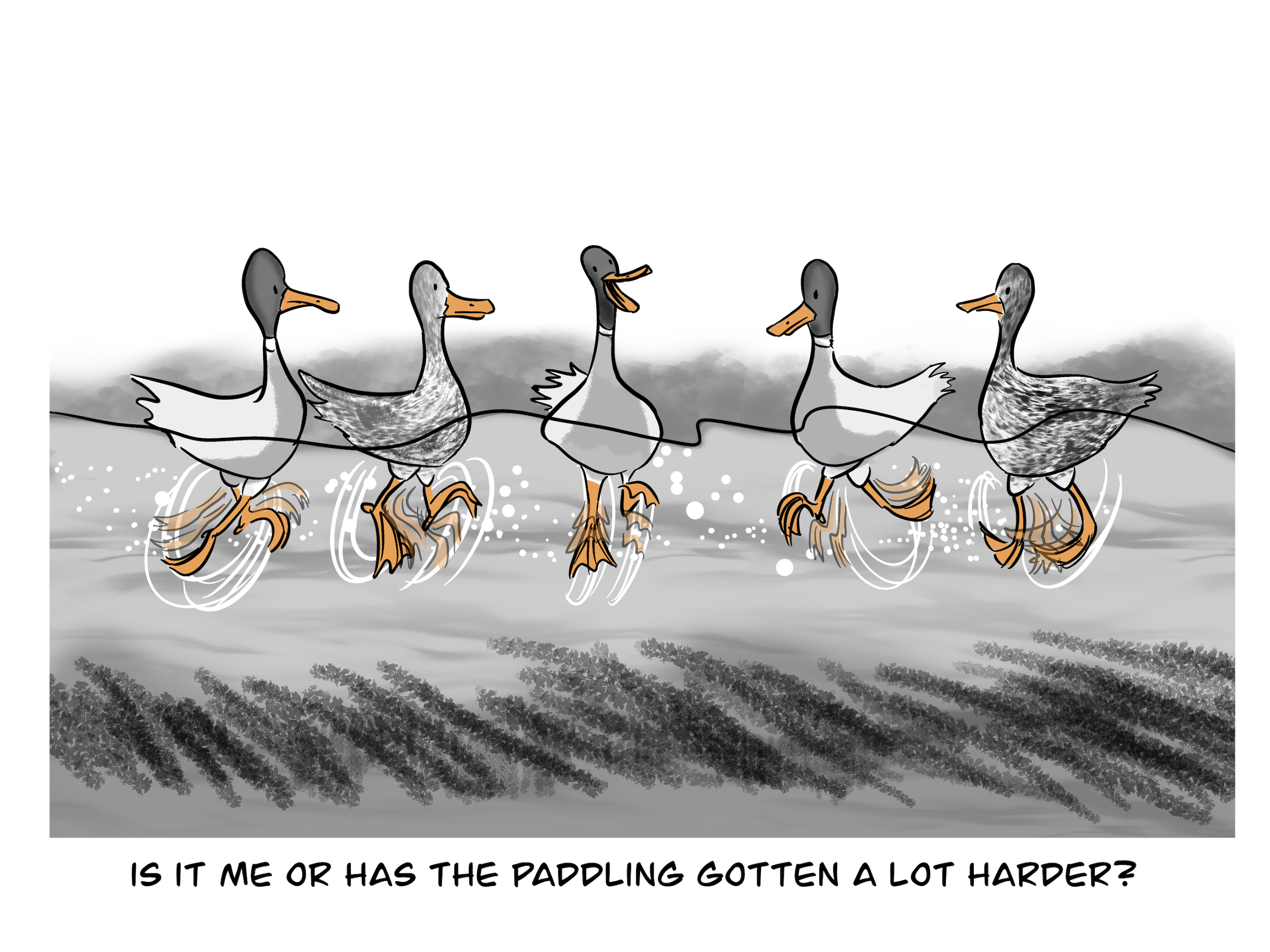 """5 ducks: """"Is it me or has the paddling gotten a lot harder?"""""""